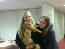 Vermiste kat na half jaar gevonden in Alphen
