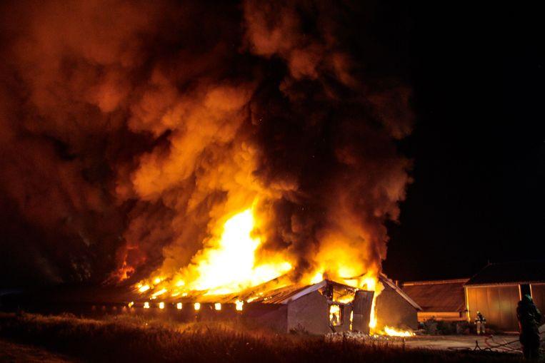 In deze stal in Nijkerk (Gelderland) kwamen deze week duizenden kippen om het leven door een brand. Beeld ANP