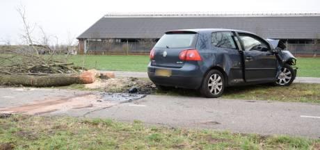 28-jarige man uit Helmond overleden na botsing tegen boom in Hilvarenbeek