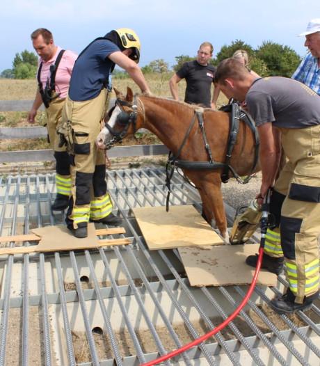 Brandweer bevrijdt paard uit wildrooster in Gendt