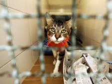 Bien-être animal: un règlement qui pourrait être amélioré selon Laura Goffart