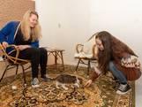 Amersfoort krijgt eíndelijk een kattencafé: in maart open