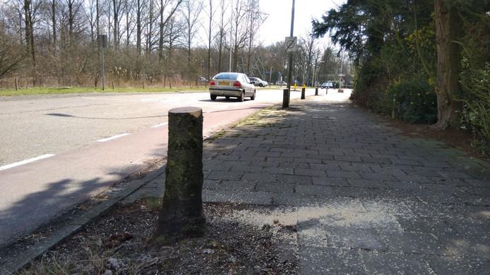 De bomen aan de Kosmoslaan in Eindhoven zijn al eerder gekapt. Maandag 13 augustus begint het werk aan de herinrichting.
