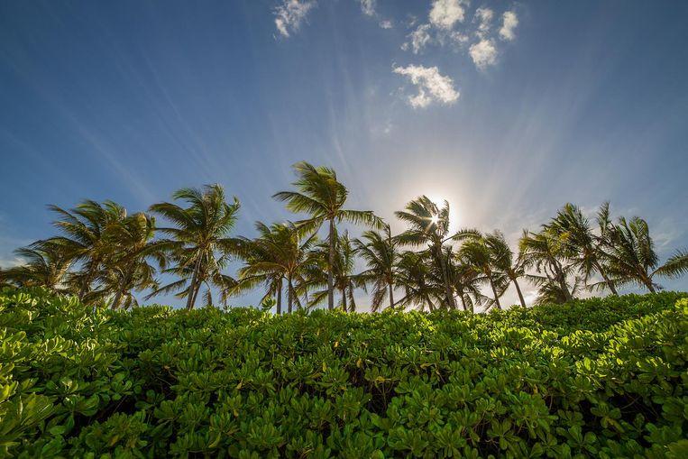 De Bahama's als belastingparadijs. Beeld thinkstock