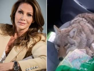 """Phaedra Hoste neemt haar volgers in de maling met foto van 'hond': """"Dat is een wolf!"""""""