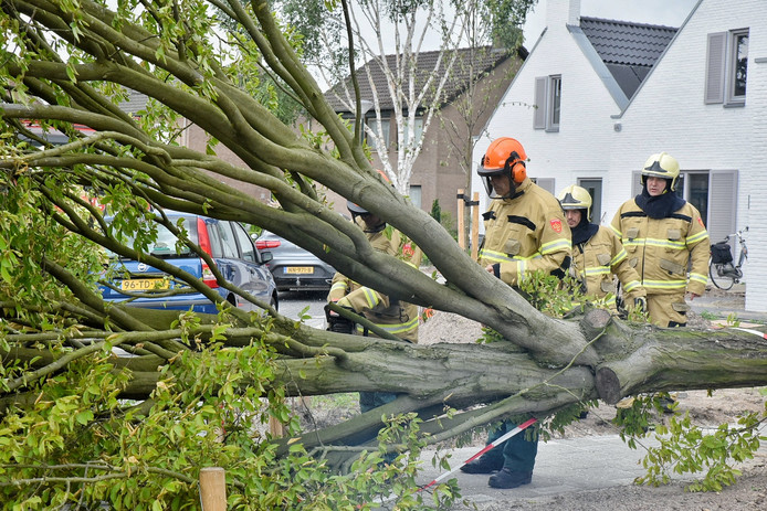 Boom om door storm in de Piet Heesterstraat in Haaren.