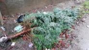 Assenede zamelt vrijdag oude kerstbomen in