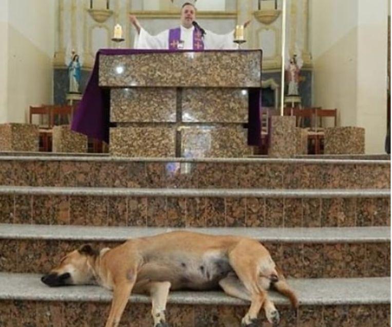 Priester redt eenzame zwerfhonden en neemt ze mee naar kerkdienst om nieuwe baasjes te vinden
