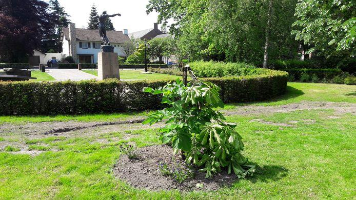 De geknakte Anne Frankboom in Waalwijk kort voor de reparatie.