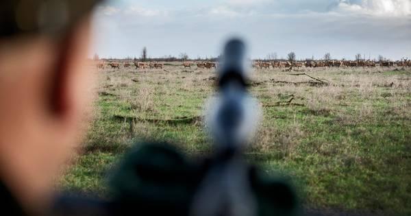 Provincie verdubbelt aantal jagers Oostvaardersplassen