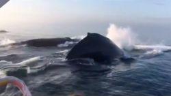 Toeristen zien zeldzame walvissprong