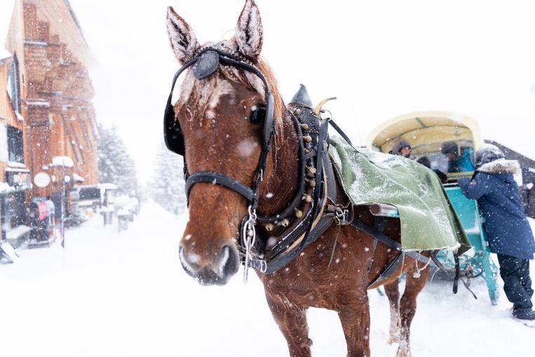 Vervoer met paard en wagen in Avoriaz. Beeld Katja Poelwijk