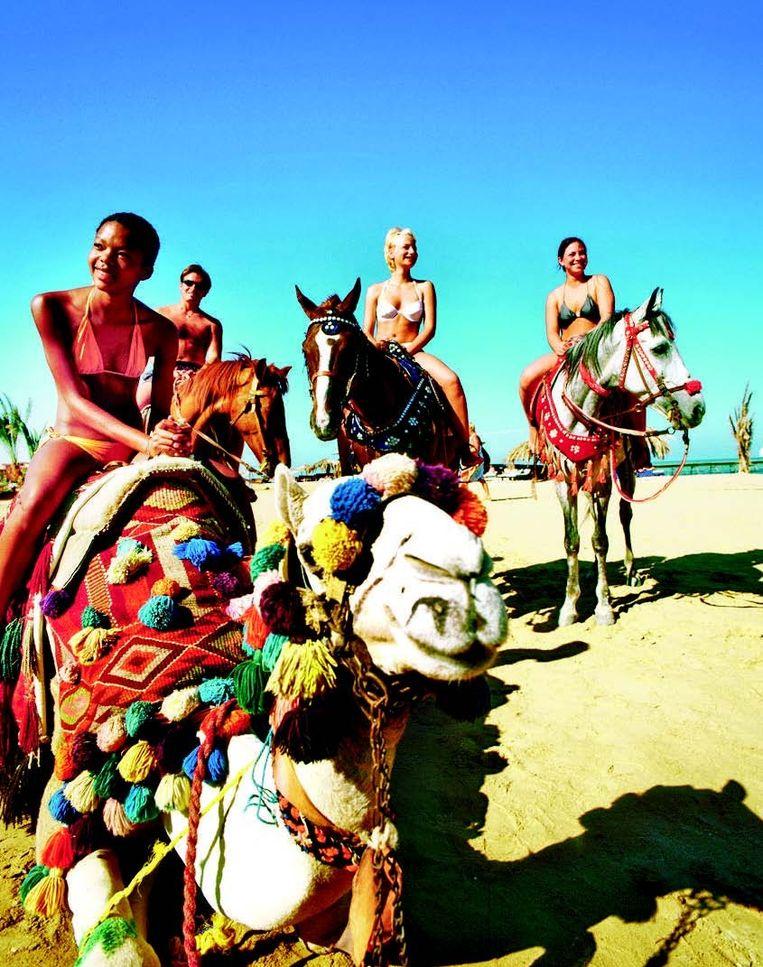 Een tochtje met paard of kameel op het strand. De uitgestrekte zandstranden zijn dé aantrekkingspool van El Gouna.