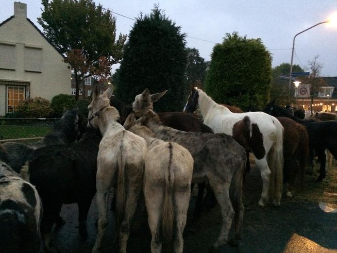 Paardenmarkt Hedel.