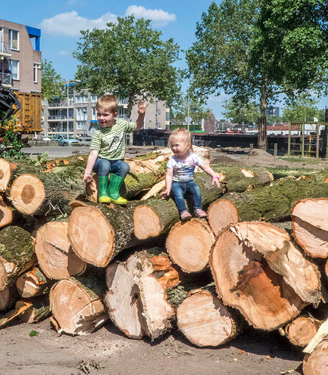Straatbeeld: Bomenkap voor 'lichter' Havenpark Zuid