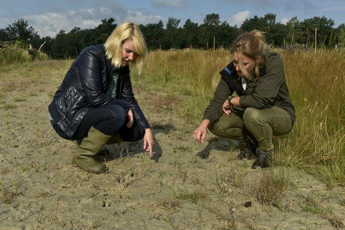 onderzoekster Vivian Maas (links) en boswachter Inge van Dongen