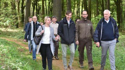 Vlaanderen betaalt 510 euro subsidie om in het bos te wandelen tegen burn-out