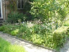 Pleidooi voor groenere tuinen in De Bilt
