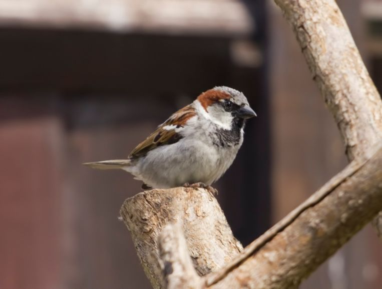 Zondag kan je een hele dag vogels spotten in eigen tuin.