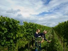 Wijndomein Erichem uitgeroepen tot beste wijngaardenier