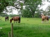 8, 9 en 10 juni: Paardentrekwedstrijd in Eede