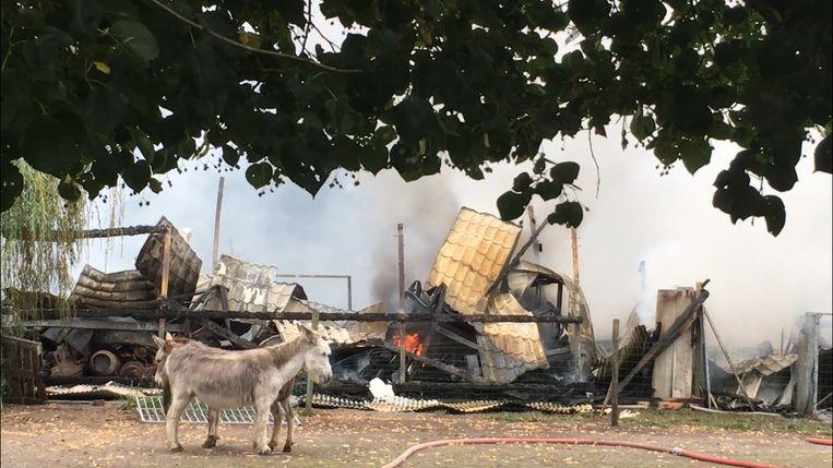 De loods brandde helemaal uit en stortte in. De dieren op een naastgelegen wei raakten niet gewond.