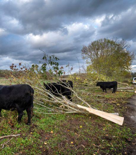 Gat in landschap door kap bomen langs Defensiedijk: 'De tranen schieten in mijn ogen'