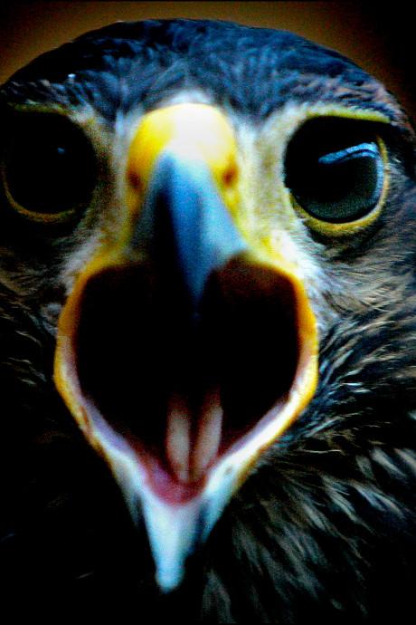 Tuincentrum Bosrand weerlegt kritiek op roofvogelshow