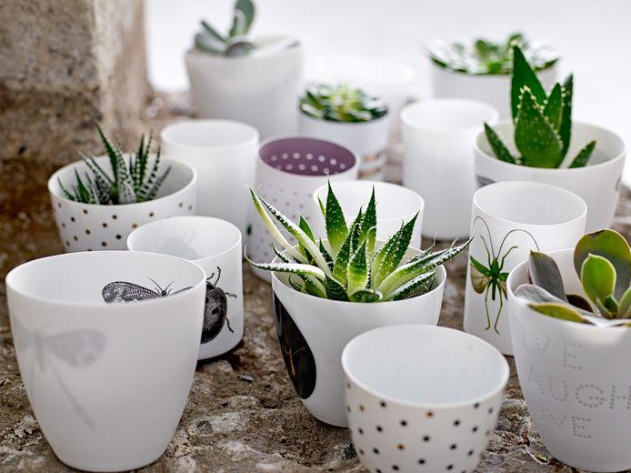 Cactustuintje