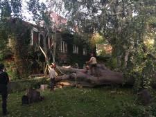 Stormschade in Gent: eeuwenoude boom valt op woning, als bij wonder geen gewonden