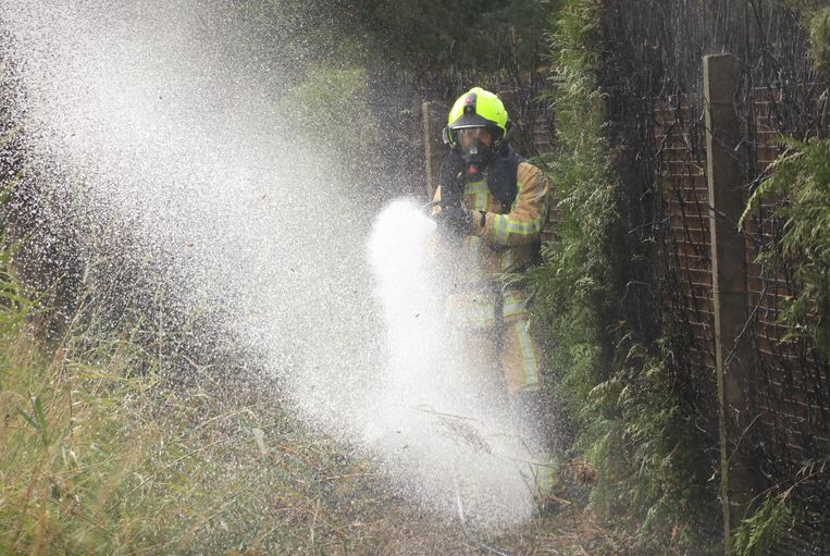 Enkele agressieve wespen kregen een douche van de brandweer