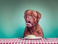 Uit eten met de hond (en ja, Bello krijgt ook sterreneten)