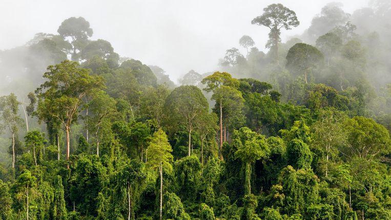 80 procent van de winst uit reclame-inkomsten gebruikt Ecosia om bomen te planten in onder meer Peru, Madagaska en Burkina Faso.