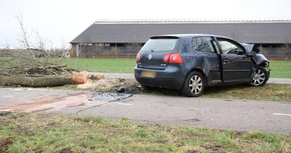 Bestuurder overleden na botsing tegen boom in Hilvarenbeek.