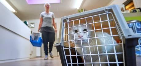 Ambulanceritjes met kwaaie katten en een bloedend egeltje
