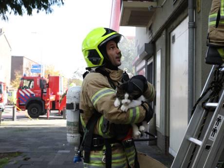 Hennepkwekerij aangetroffen na brand in pand Schiedam
