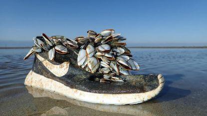 Schoen uit Verenigde Staten spoelt aan in Oostduinkerke