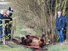 Brandweer redt gevallen paard uit sloot in Moergestel