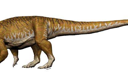"""Fossiel van """"eerste reuzendinosaurus"""" ontdekt in Argentinië"""