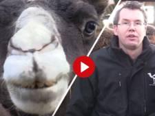 Video van de Dag | Ben je jouw bureaubaantje zat? Word kamelenmelker!