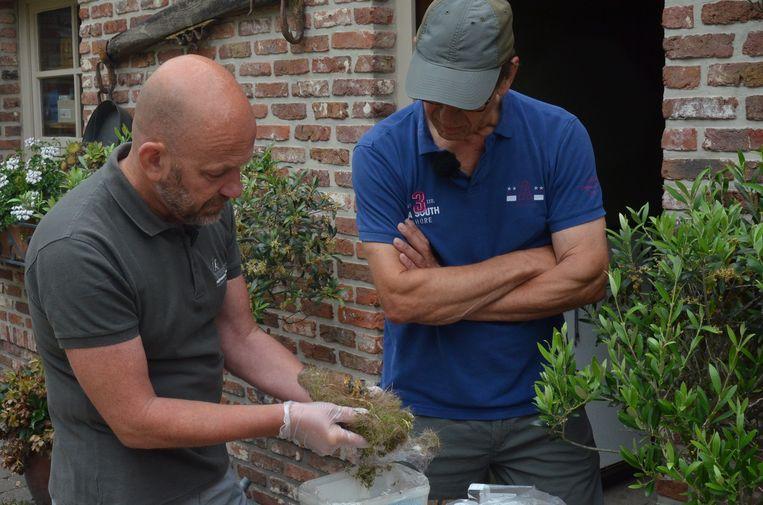 Jan Rodts en Yves Bogaert onderzoeken het nestje met dode mezenjongen