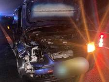 Reebokje overleeft klap met auto op de N50 bij Ens niet