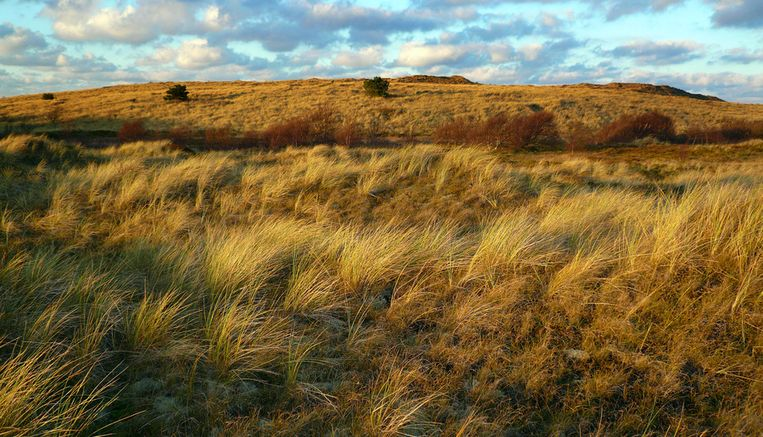 Duingebied op Vlieland. © ANP Beeld