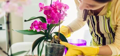 Je orchidee wil niet meer bloeien: met deze tips houd je ze in topvorm