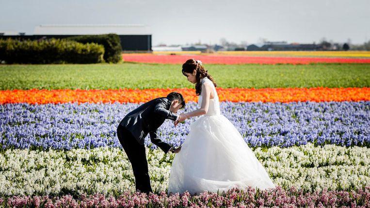 Een bruidspaar in een bollenveld net buiten de Keukenhof. Beeld anp