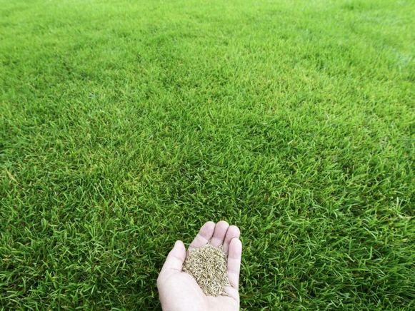In de periodes maart-mei en september-oktober maken je zaadjes het meeste kans om uit te groeien tot een mooie, verzorgde grasmat.