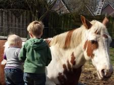 American Paints: bijzondere paarden op het Twentse platteland in Delden