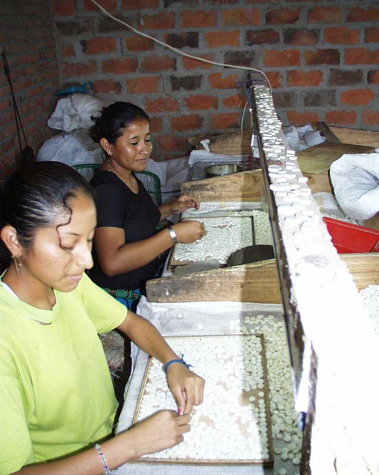 De zaden van de tagua worden op het bedrijfje in Ecuador verwerkt tot 'ivoren' sieraden of poppetjes die populair zijn in Azië. Beeld Naya Nayon