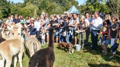 Marijn Devalck doopt jonge dieren  op alpacaboerderij in Brakel