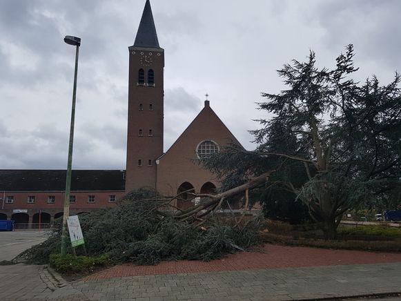 Een stevige tak van de iconische boom aan de kerk van Bergom sneuvelde.